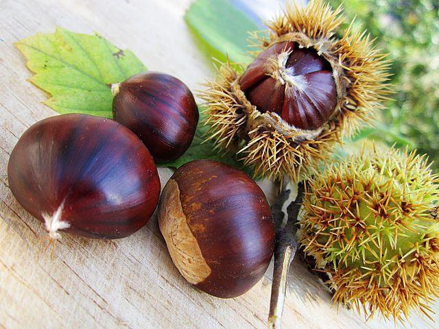 chestnuts-58410__480