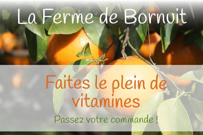 La Ferme de Bornuit - Les oranges de Sicile