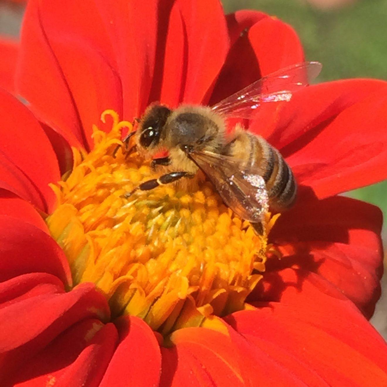 soleil-du-mexique-et-abeille